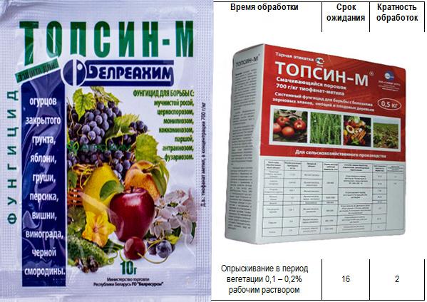 При грибковой инфекции, сливу необходимо обработать фунгицидами