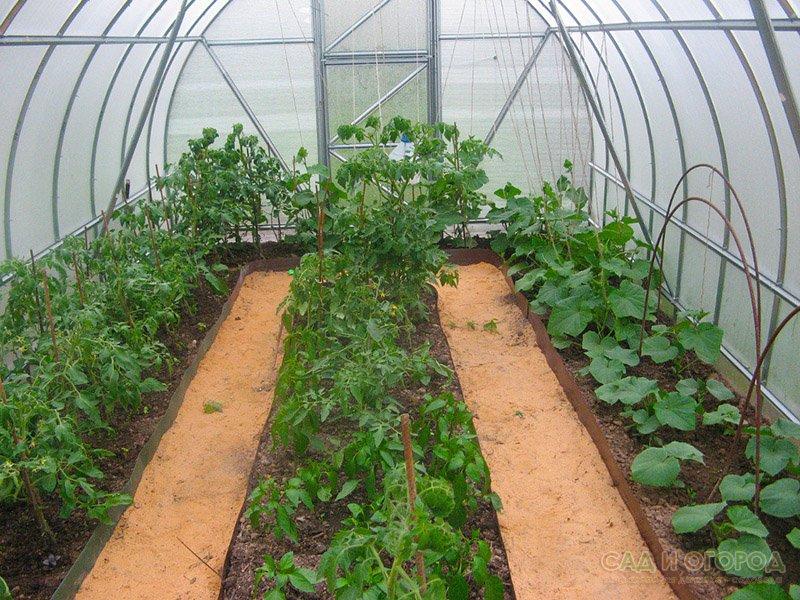В это время, если вы посадите в теплице огурцы, помидоры и перец, они очень стремительно начнут укореняться