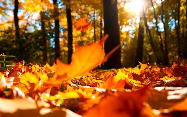 Если до 14 числа на деревьях опали не все листья, то не стоит надеяться на теплую осень в следующем году