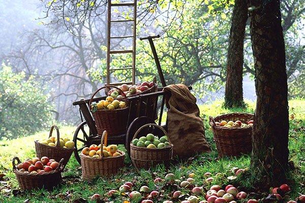 Лунный календарь рекомендует заняться сбором урожая