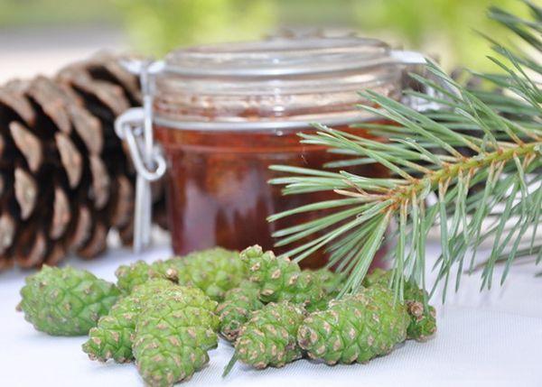 Варенье из сосновых шишек применяют для профилактики заболеваний