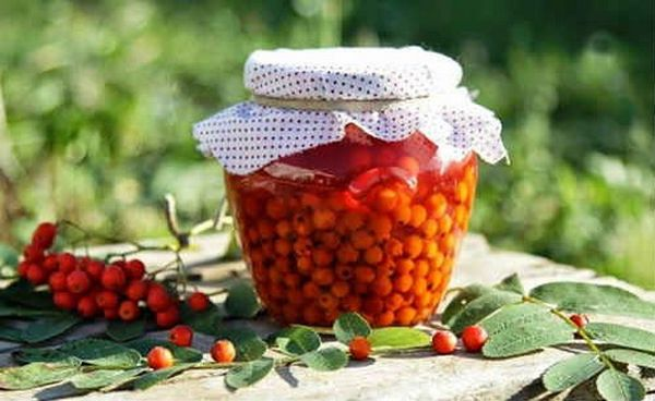 Ягоды красной рябины богаты витаминами