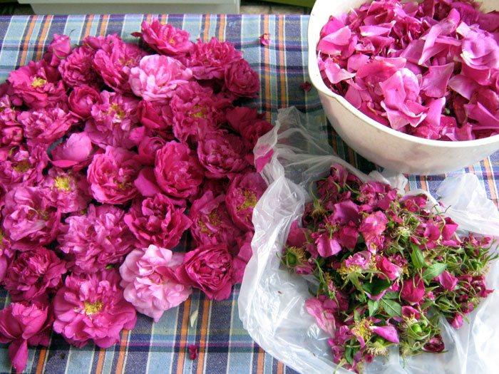 Лепестки чайной розы как основной ингредиент розового варенья
