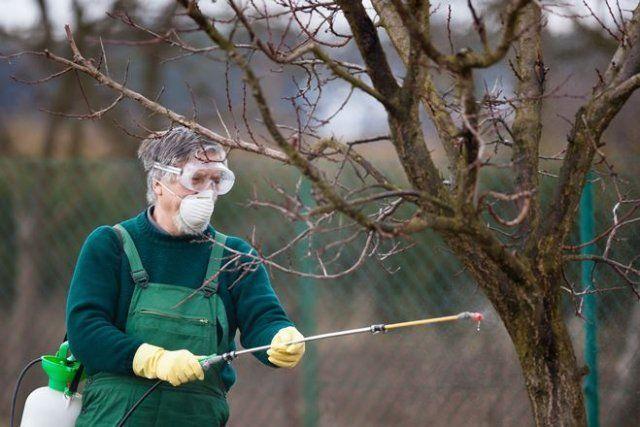 Опрыскивание растений для профилактики различных заболеваний