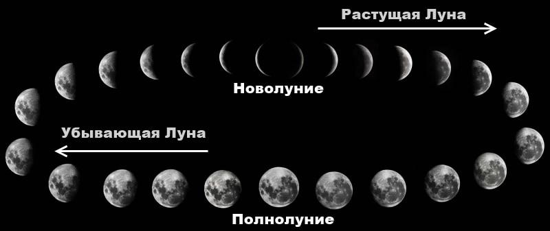 Фазы Луны оказывают влияние на рост и развитие растений