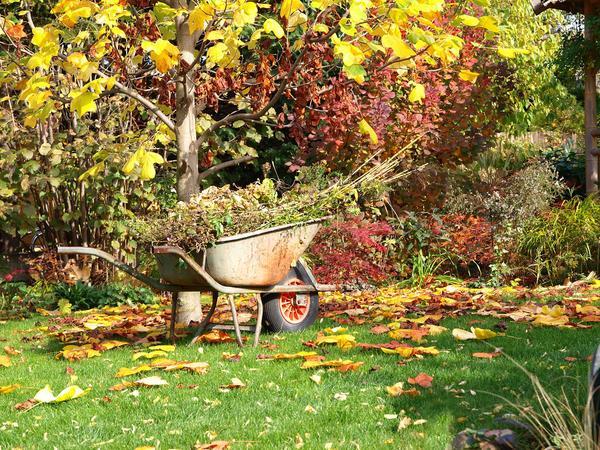 Осенью начинается подготовка сада к зиме