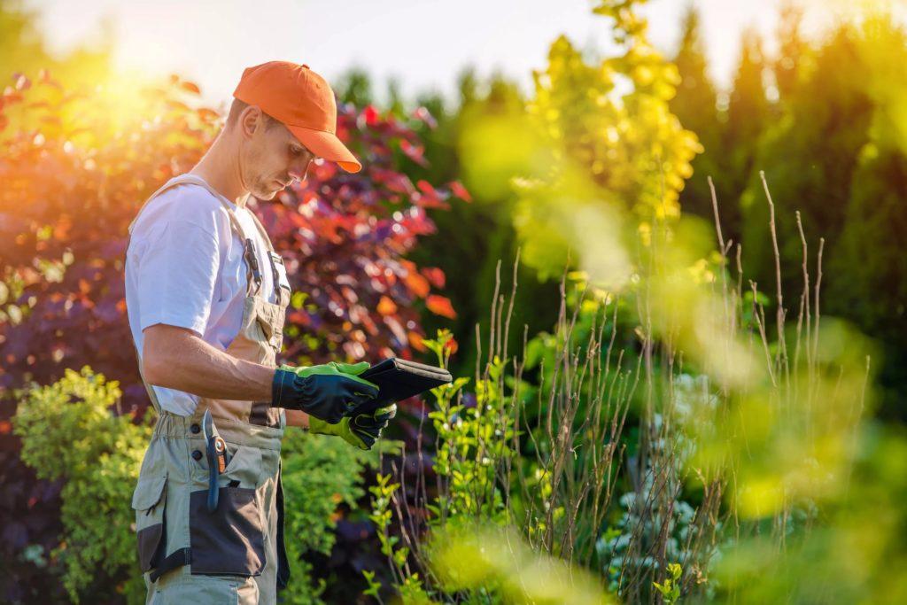 Какой ты садовник: угадай цветок по фото (тест)
