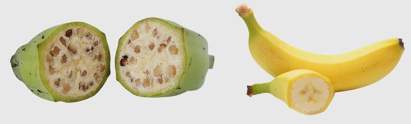 Отгадай, как выглядели овощи и фрукты до ГМО (тест)